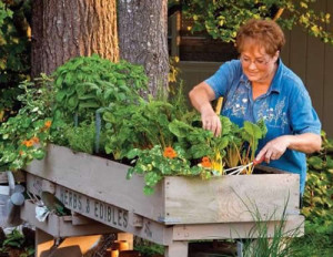 Mathews Home Service Builds Tabletop Gardens